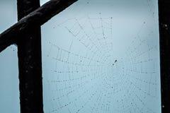 Απελευθερώσεις δροσιάς σε έναν Ιστό αραχνών Στοκ Φωτογραφία