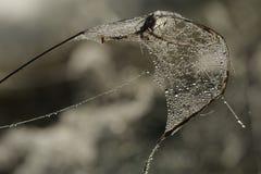 Απελευθερώσεις της δροσιάς σε έναν Ιστό αραχνών Στοκ φωτογραφία με δικαίωμα ελεύθερης χρήσης