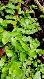 Απλά πράσινα φύλλα στοκ φωτογραφίες