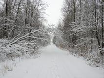 Απλός δρόμος και χιονώδη δέντρα, Λιθουανία στοκ φωτογραφία με δικαίωμα ελεύθερης χρήσης
