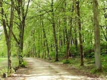 Απλός τρόπος και όμορφα δέντρα, Λιθουανία στοκ φωτογραφία