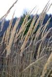 Απλότητα του φθινοπώρου στοκ φωτογραφίες με δικαίωμα ελεύθερης χρήσης