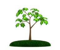 απλό δέντρο σφενδάμνου Στοκ Φωτογραφίες