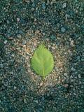 Απλό πράσινο φύλλο στο έδαφος spotlit από τον ήλιο στοκ φωτογραφία με δικαίωμα ελεύθερης χρήσης