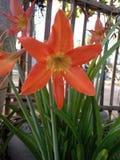 Απλό preety λουλούδι του ορυχείου στοκ φωτογραφία με δικαίωμα ελεύθερης χρήσης