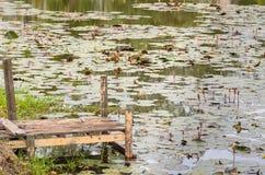 Αποβάθρα και Lotus Στοκ εικόνα με δικαίωμα ελεύθερης χρήσης