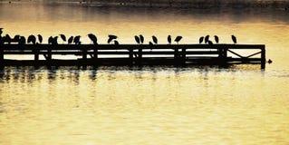 Αποβάθρα, πουλί, ηλιοβασίλεμα, λίμνη, silohuette, Ιταλία Στοκ Φωτογραφίες