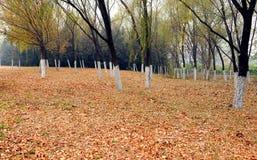 αποβαλλόμενα δάση στοκ φωτογραφίες με δικαίωμα ελεύθερης χρήσης