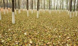 αποβαλλόμενα δάση στοκ εικόνα
