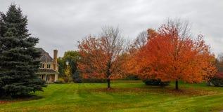Αποβαλλόμενα δέντρα στο προάστιο στοκ φωτογραφία με δικαίωμα ελεύθερης χρήσης