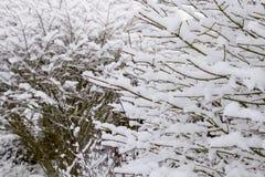αποβαλλόμενος χειμώνας  στοκ εικόνες