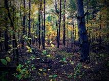 Αποβαλλόμενο δάσος στην Ευρώπη στοκ φωτογραφία
