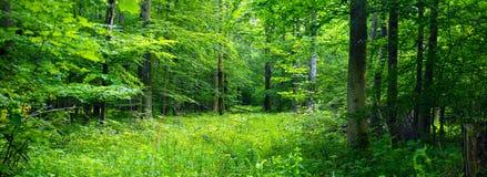 αποβαλλόμενο δάσος Στοκ εικόνα με δικαίωμα ελεύθερης χρήσης