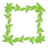 Αποβαλλόμενο πλαίσιο με τους μίσχους και τα πράσινα φύλλα Στοκ Φωτογραφίες