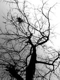 Αποβαλλόμενα δέντρα και ουρανός στο γραπτό τρόπο Στοκ Φωτογραφία