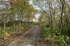 Αποβαλλόμενο δάσος το φθινόπωρο Στοκ Φωτογραφίες