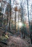 Αποβαλλόμενο δάσος φθινοπώρου και λάμποντας ήλιος, φυσικό εποχιακό scener Στοκ φωτογραφία με δικαίωμα ελεύθερης χρήσης