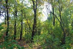 Αποβαλλόμενο δάσος Στοκ Εικόνα