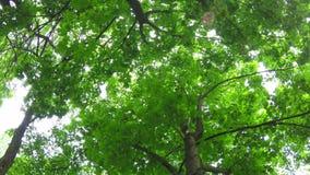 Αποβαλλόμενο δάσος απόθεμα βίντεο