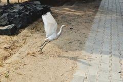Απογείωση πουλιών Στοκ εικόνες με δικαίωμα ελεύθερης χρήσης