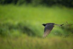 Απογείωση! Στοκ εικόνα με δικαίωμα ελεύθερης χρήσης