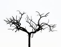 Απογυμνωμένο δέντρο Στοκ φωτογραφία με δικαίωμα ελεύθερης χρήσης
