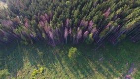 Αποδάσωση Εναέρια άποψη κηφήνων του δάσους που καταστρέφεται στην Ουκρανία φιλμ μικρού μήκους