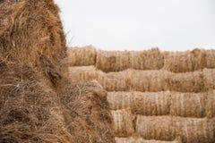 Αποθήκευση με τους σωρούς των σωρών του σανού στοκ εικόνα με δικαίωμα ελεύθερης χρήσης