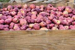 αποθήκευση δοχείων μήλω& Στοκ φωτογραφία με δικαίωμα ελεύθερης χρήσης