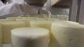 Αποθήκη εμπορευμάτων για την αποθήκευση του σπιτικού τυριού αιγών απόθεμα βίντεο