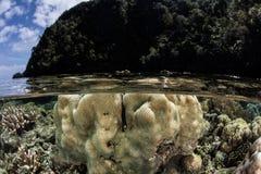 Αποικία κοραλλιών στην ίσαλη γραμμή στοκ φωτογραφία