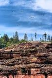 αποικία πουλιών Στοκ φωτογραφία με δικαίωμα ελεύθερης χρήσης