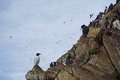 Αποικία πουλιών Στοκ Εικόνες