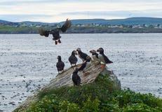 Αποικία πουλιών Στοκ Εικόνα