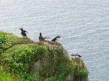 Αποικία πουλιών Στοκ Φωτογραφίες