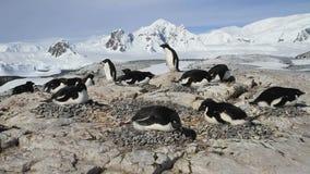 αποικία Adеlie penguins σε ένα μικρό νησί απόθεμα βίντεο