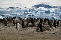 Αποικία Adelie penguin με τις απόψεις του κόλπου και των παγόβουνων στο υπόβαθρο Στοκ φωτογραφία με δικαίωμα ελεύθερης χρήσης