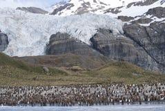 Αποικία Penguin βασιλιάδων Στοκ φωτογραφία με δικαίωμα ελεύθερης χρήσης