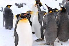 Αποικία Penguin Στοκ Φωτογραφία