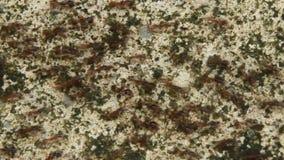 Αποικίες μυρμηγκιών στο έδαφος απόθεμα βίντεο