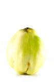 Αποκαλούμενο κυδώνι της Apple ποικιλία ή oblonga cotogna Στοκ φωτογραφία με δικαίωμα ελεύθερης χρήσης