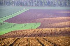 Αποκαλούμενο τοπίο Moravian Τοσκάνη, Μοραβία, Δημοκρατία της Τσεχίας Στοκ Εικόνες