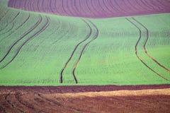Αποκαλούμενο τοπίο Moravian Τοσκάνη, Μοραβία, Δημοκρατία της Τσεχίας Στοκ εικόνες με δικαίωμα ελεύθερης χρήσης