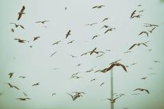 Αποκαλυπτική σκηνή των πουλιών που πετούν πέρα από την απόρριψη στοκ εικόνες με δικαίωμα ελεύθερης χρήσης