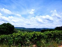 Αποκλειστικό πράσινο τοπίο της νότιας Βραζιλίας στοκ εικόνα