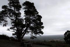 Αποκορεσμένη σκιαγραφία του μεγάλου δέντρου πεύκων ενάντια στον ορίζοντα στοκ φωτογραφία με δικαίωμα ελεύθερης χρήσης