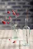 Αποκριές, γοτθικό υπόβαθρο Κράταιγος brunches Στοκ εικόνα με δικαίωμα ελεύθερης χρήσης