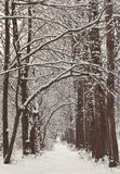 Αποκλεισμένο από τα χιόνια χειμερινό δάσος Στοκ εικόνα με δικαίωμα ελεύθερης χρήσης