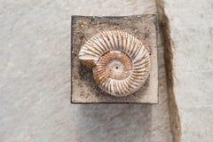 Απολίθωμα και τετράγωνο Nautilus στο πέτρινο υπόβαθρο στοκ εικόνες