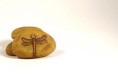 απολίθωμα μυγών δράκων Στοκ εικόνες με δικαίωμα ελεύθερης χρήσης